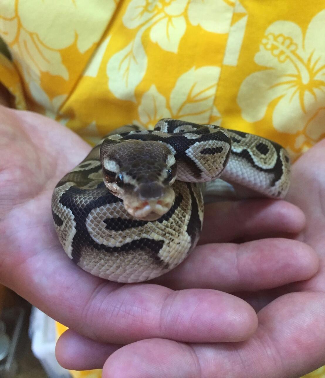 蛇 ペット ショップ